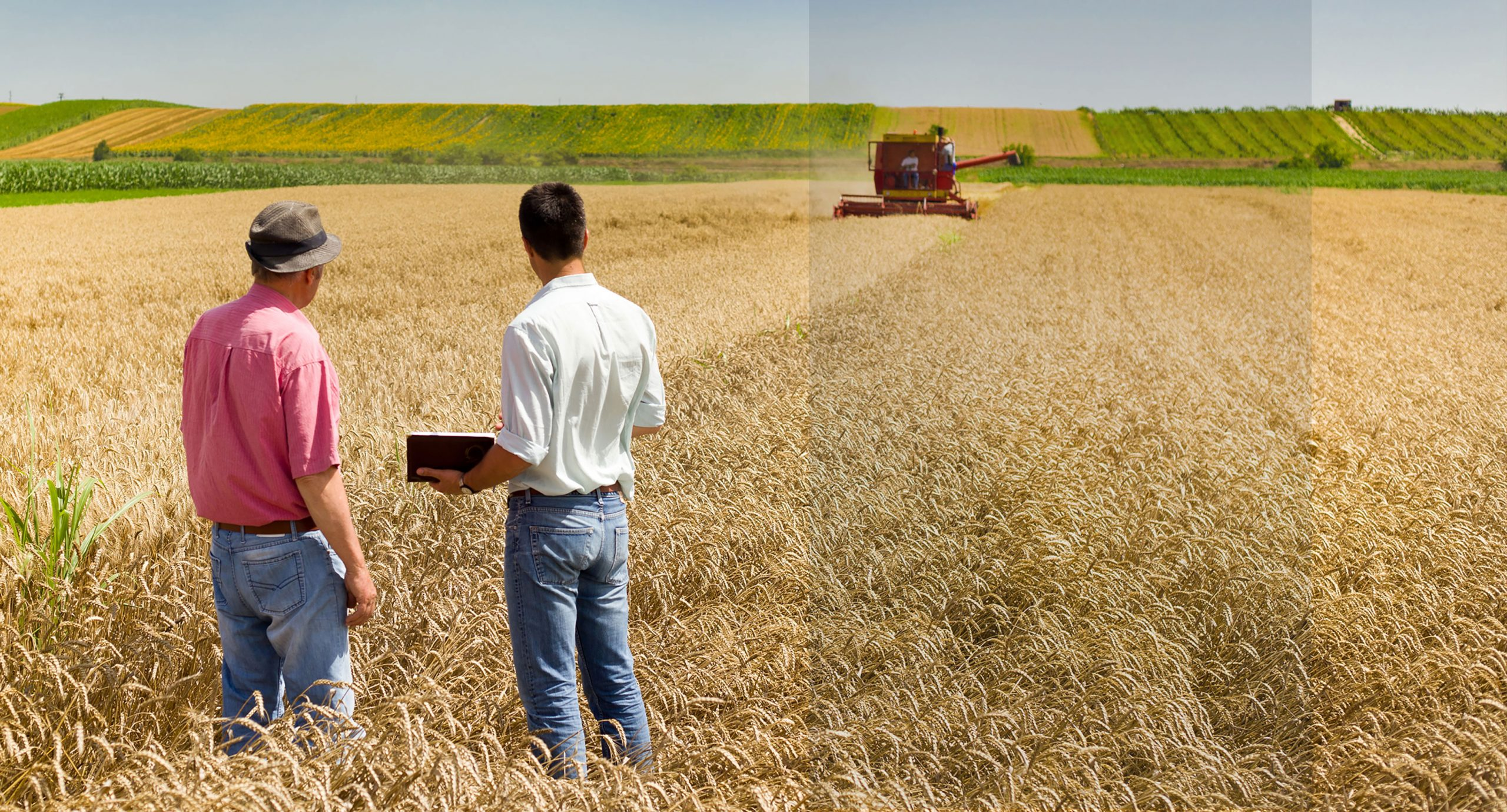 Business discussion in farm field